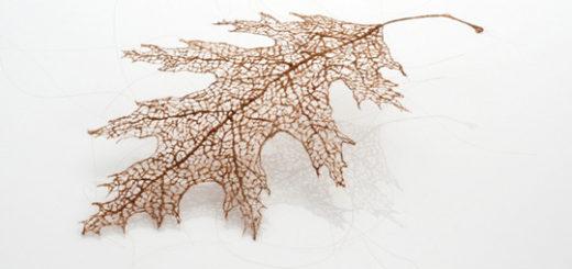leaf_01