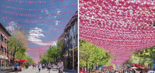 Montreal - Boules Roses
