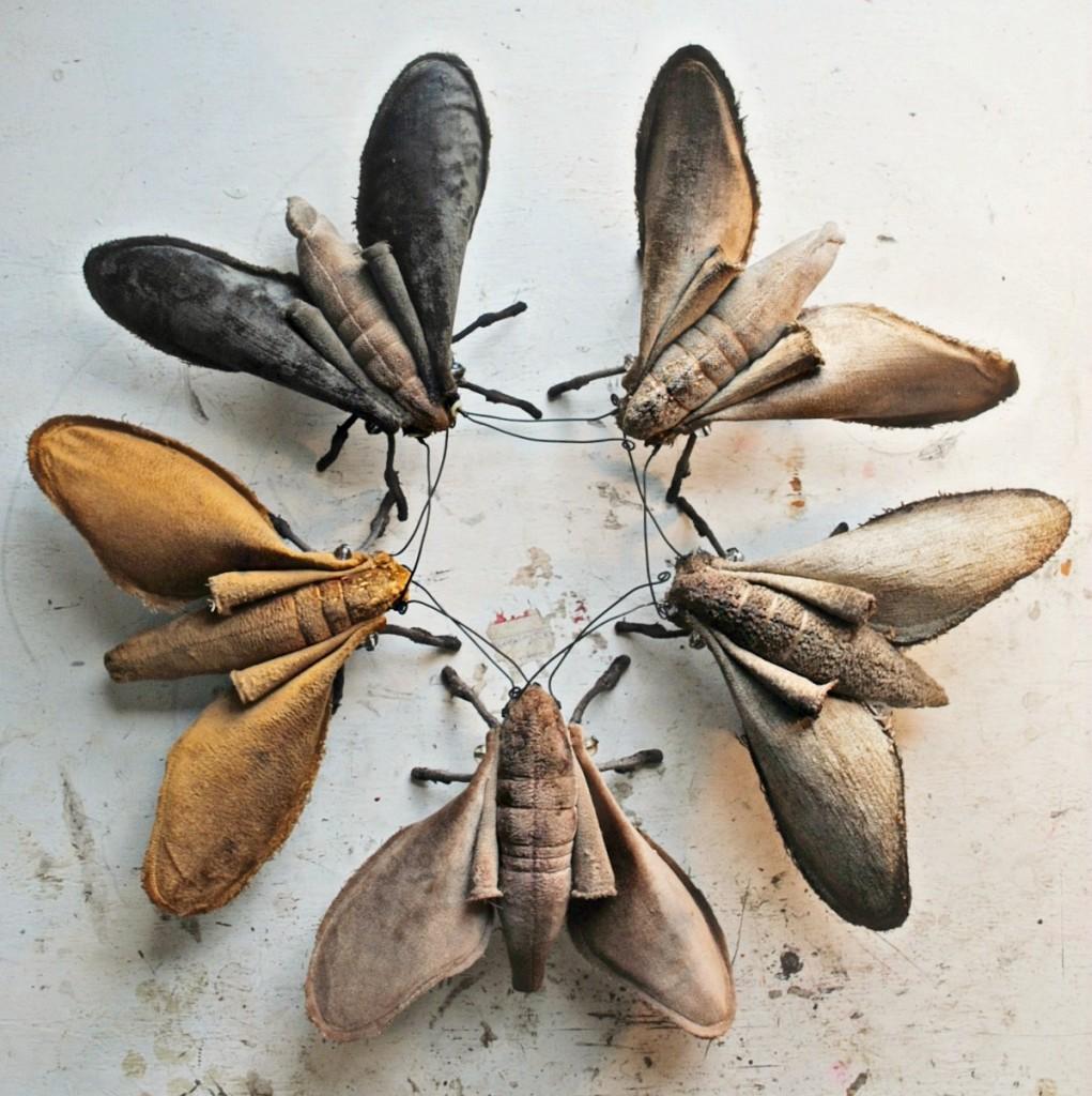 Moth-star-done-1021x1024